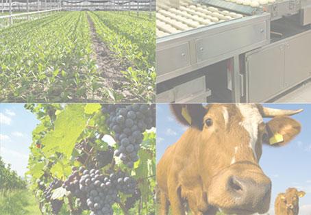 Veille agroalimentaire